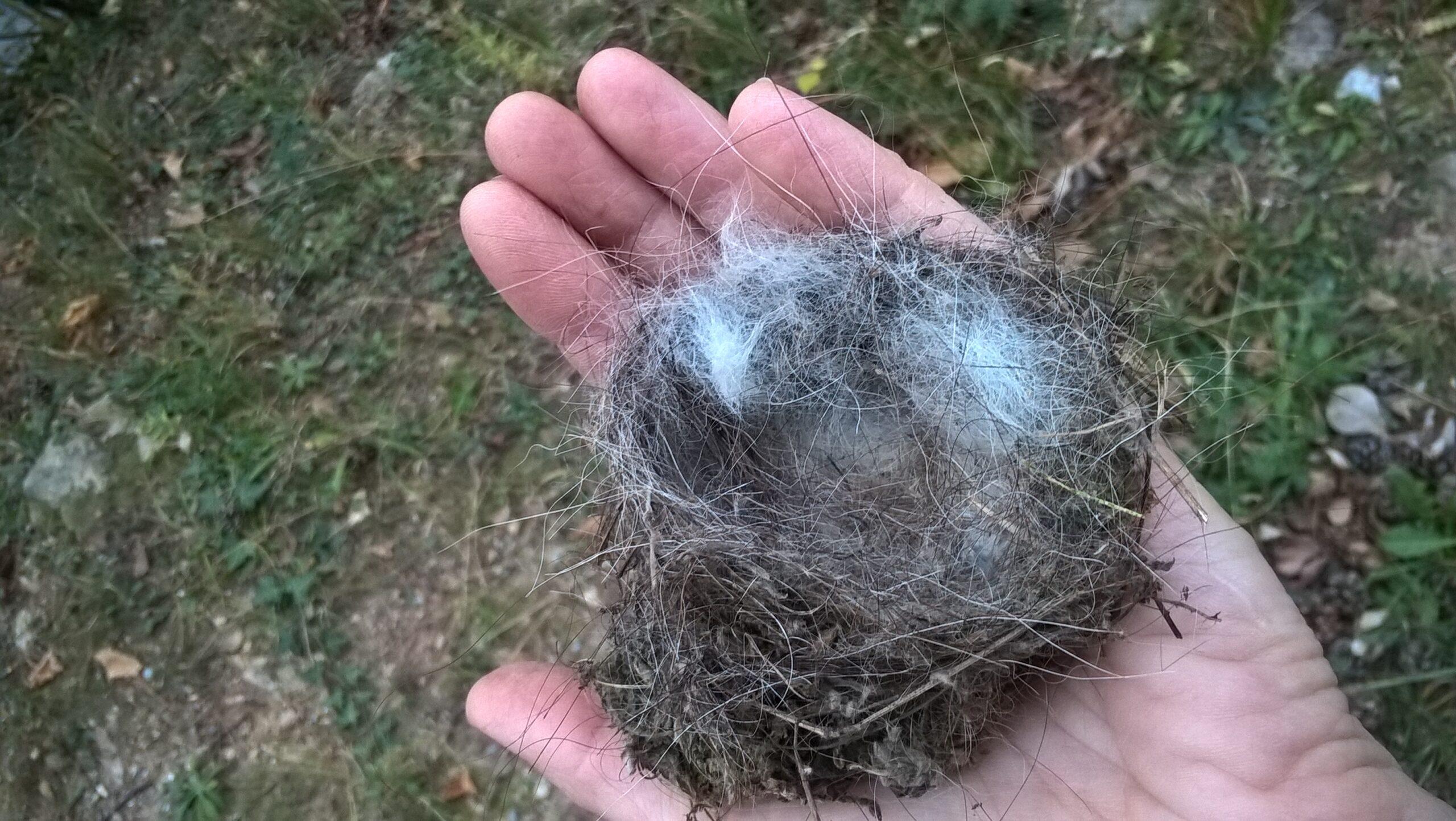 Una mano aperto che tiene un nido d'uccello