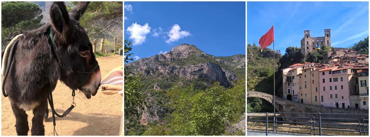 Fotocollage asino che anusa coperta, un monte, vista sul borgo medioevale Dolceacqua