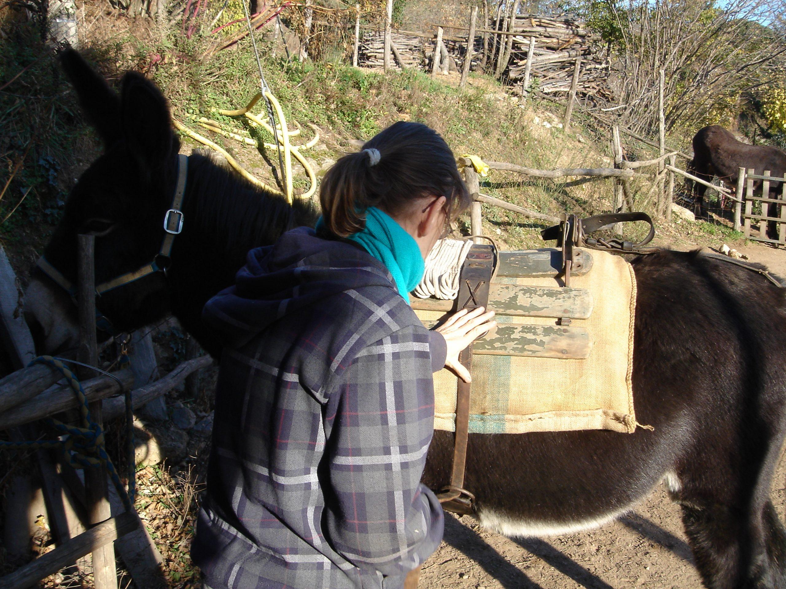 Woman putting pack saddle on donkey